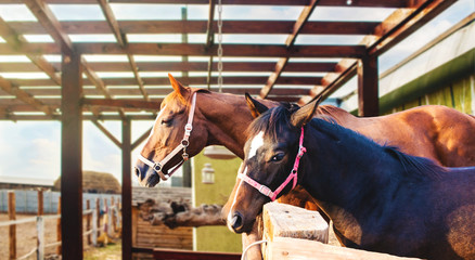 Mother horse and baby foal . Herd of horses in a stable . fall in the country . Horses in stable