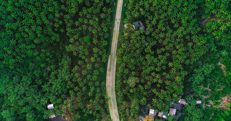 Beautiful aerial view of road on palms at Siargao Island, Philippines