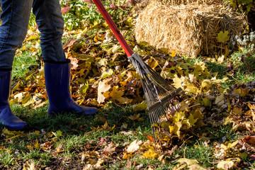 Woman outdoors in fall raking leaves in back yard