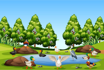 Many bird in nature