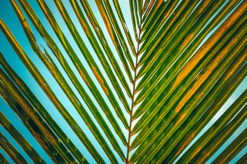 Wall Mural - Striped pattern of palm leaf over blue sky. vintage abstract natue background.