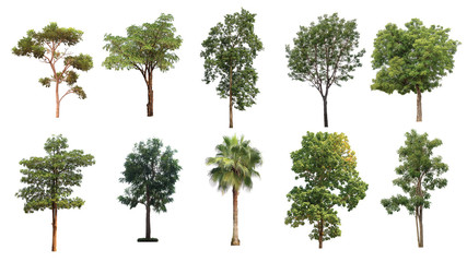 The collection of trees on white background.