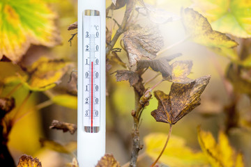 The thermometer on the background of yellow leaves shows the temperature of the autumn day - 12 degrees of heat_