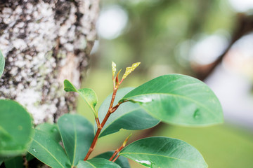 leaves of young on tree in forest.