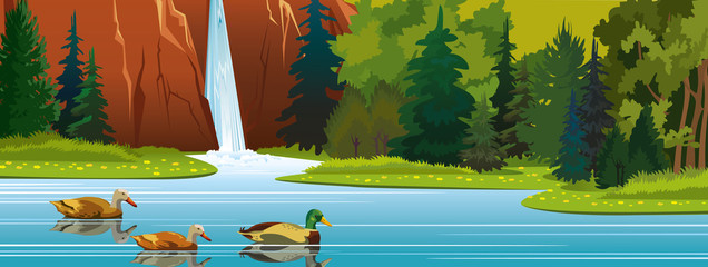 Ducks, lake, waterfall, forest. Summer nature.