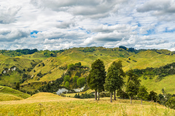 New Zealand nature farmland green valley landscape with trees. Travel destination.