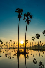 Silhouette of twin palmyra palm or toddy palm trees and their reflections in the field during an early beautiful dawn with colorful sky
