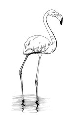 Flamingo hand drawn illustrations