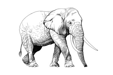 Elephant hand drawn illustrations
