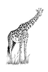 Giraffe hand drawn illustrations