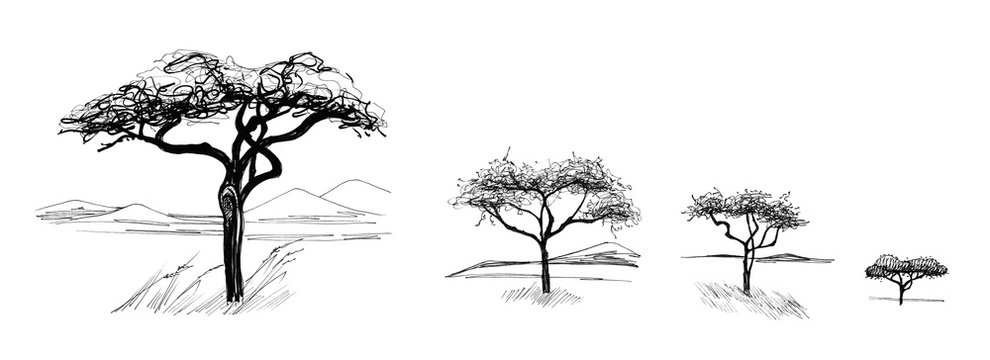 Hand drawn sketched african tree