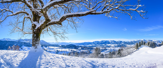 Blick in die winterlich verschneiten Allgäuer Berge