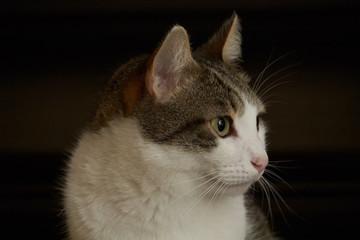 Portrait of housecat