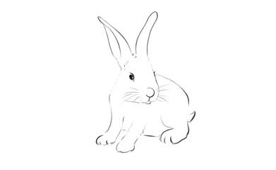 beautiful rabbit illustration