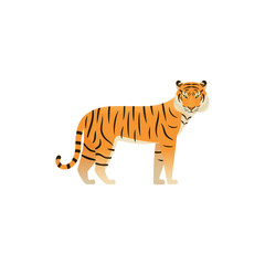 Tiger flat design. Vector. Zoo wild cat, animal isolated. African fauna on white background. Cartoon Illustration.