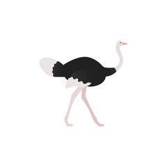 Ostrich flat design. Vector. Bird standing isolated. Zoo animal. African fauna on white background. Cartoon Illustration.