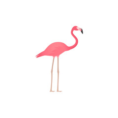 Flamingo. Vector. Pink tropical, exotic bird isolated in flat design. African fauna on white background. Zoo animal. Cartoon Illustration.