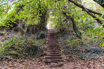 Escalier en pierre dans la forêt en automne