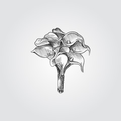Hand Drawn Bridal bouquet Sketch Symbol isolated on white background. Vector of Wedding elements In Trendy Style. Calla Lily Flowers in sketch style