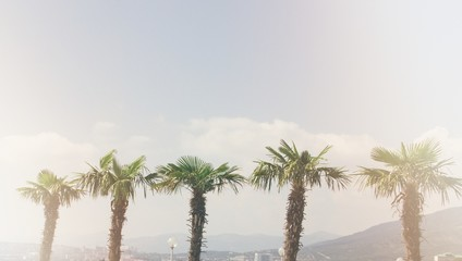 palm retro style