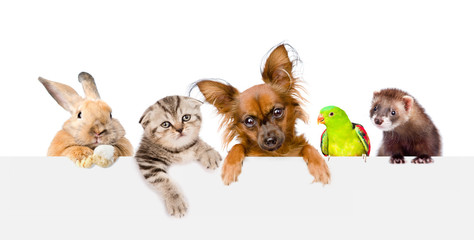 Group of pets  over empty white banner. isolated on white background. Space for text