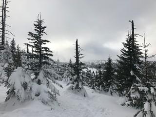 natura zima śnieg lód drzewa niebo