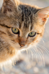 Portrait of a cute small cat. Close up