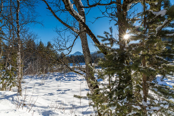 cold sunny winter scene with snow covered lake and forest