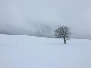 Einsamer Baum in Winterlandschaft