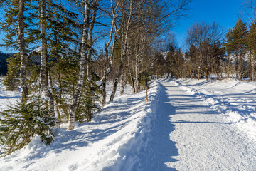 forest hiking trail in Seefeld covered in snow on sunny winter day