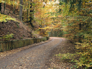 Empty road in the autumn forest