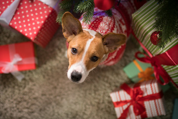dog under the christmas tree