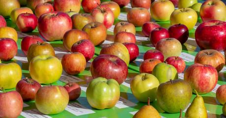various apple breeds