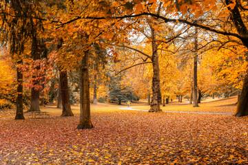 Autumn color in Laurelhurst Park, Portland Oregon