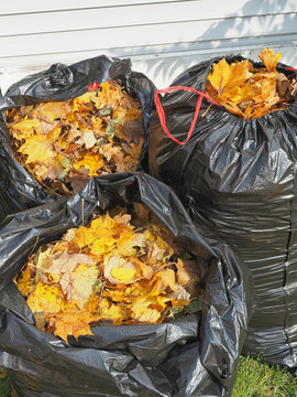 Bags of Fall Leaves - 1