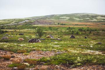Cold desert landscape