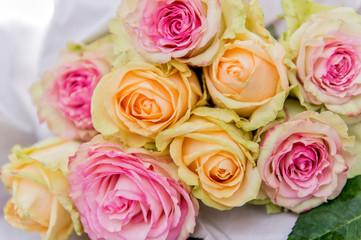 Frische Rosa und Gelbe Rossen
