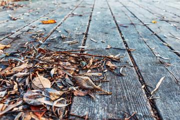 autumn leaves on old wooden boards. old boardwalk