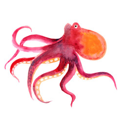Pink octopus isolated on a white background, watercolor