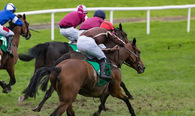 Race horses galloping for position