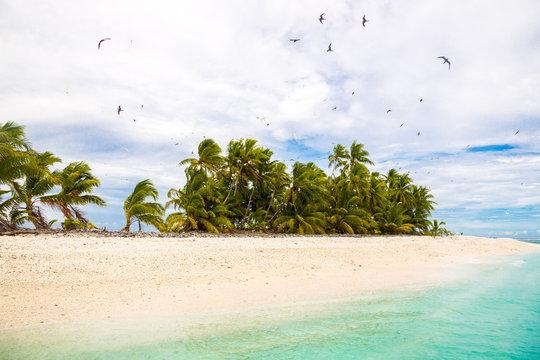 Small remote tropical island motu overgrown with palms. Sandy beach, flock of birds flying. Funafuti atoll, Tuvalu, Polynesia, South Pacific, Oceania