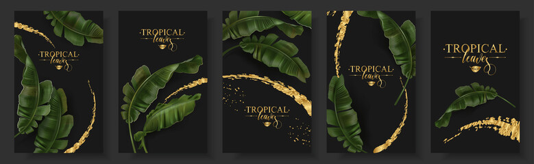 Vector banners set of banana tropic leaf