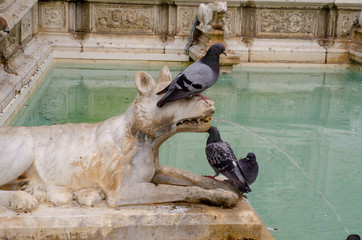 pigeons on dog fountain