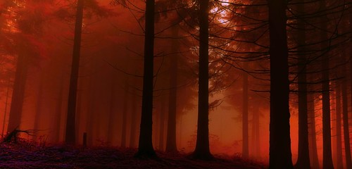 Deurstickers Rood paars red forest