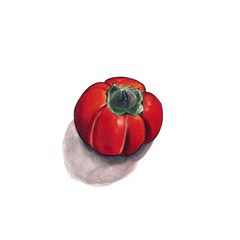 Illustration orange persimmon on white background. Drawing markers