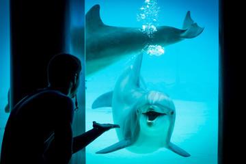 Photo sur Plexiglas Dauphin Le dauphin attentif et son dresseur