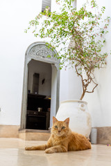 Cat lying down in a courtyard