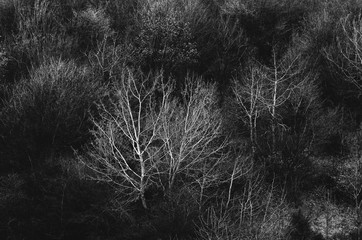 Abstract monochrome trees background