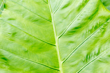 tropical leaf close up