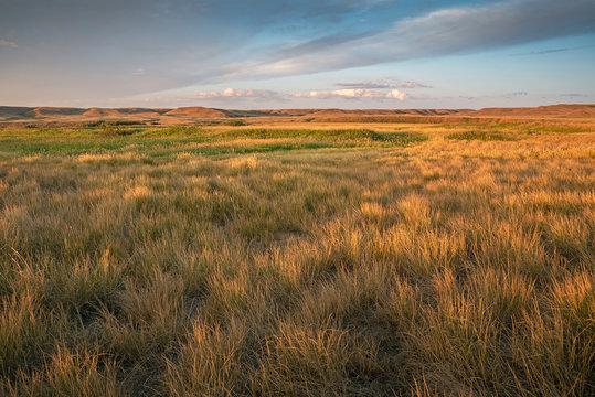 Morning at Grasslands National Park